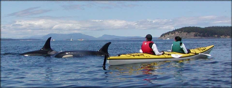 Best Whale Watching Whidbey Island